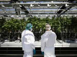 Cannabis bankruptcies start to roll in as pandemic halts financing