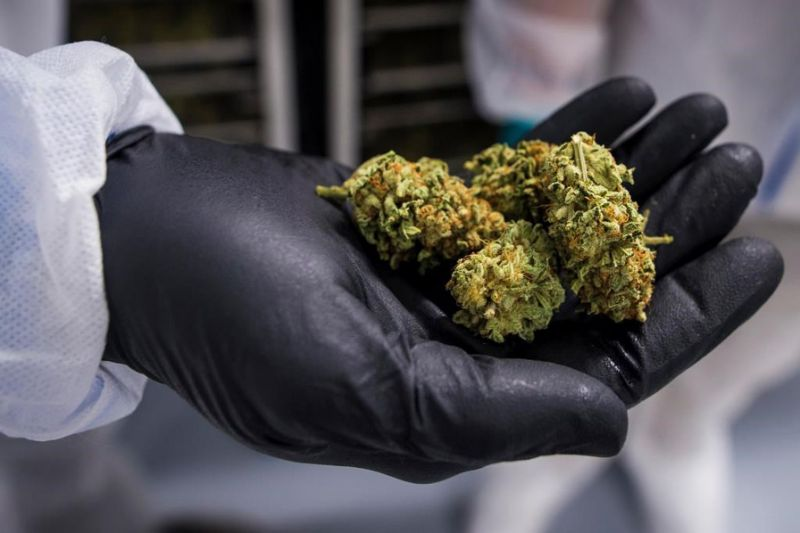 Cannabis industry braces for COVID-19 troubles, debates calls for government aid